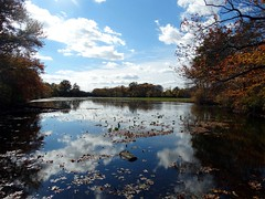 Wantagh - Twin Lakes Preserve - Autumn (112)