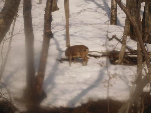鹿にテンションあがる