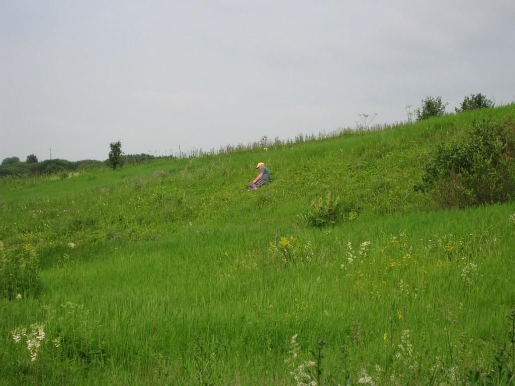 Зелёная трава у речки