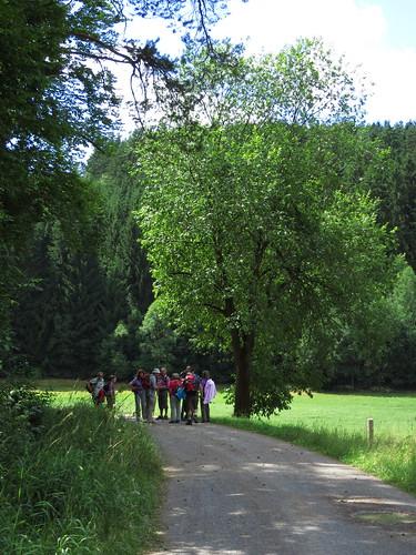 20150726 01 168 Romea Wald Weg Wiese Pilger