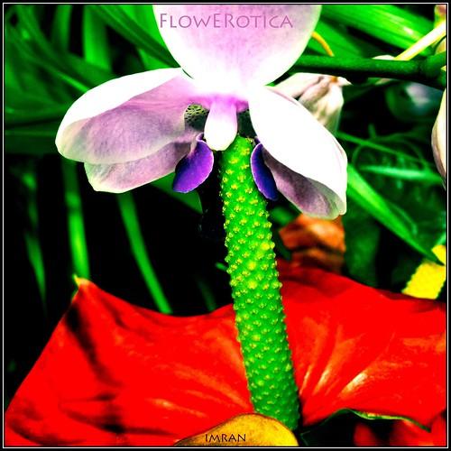 FowERotica: Flower Erotica - IMRAN™