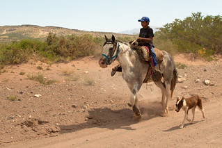 A Young Gaucho
