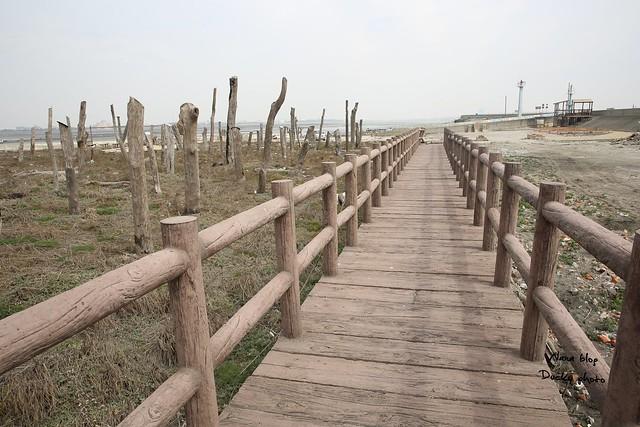 彰化福興-福寶濕地-漂流木公園 (3)