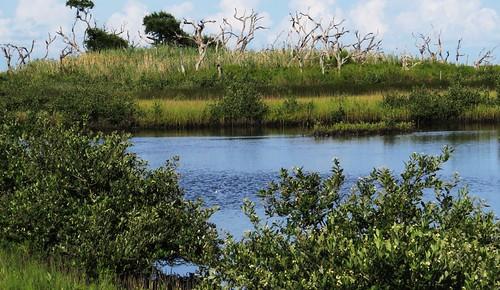 bayoulaurier louisiana la байулорье луизиана landscape outdoor поамерике crossamerica2016 travel mississippiriverdelta fork рукав дельтамиссисипиривер