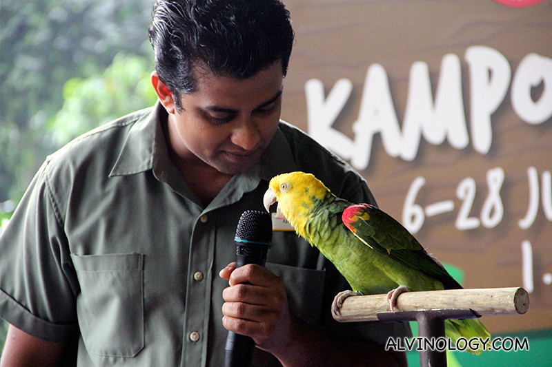 Singing parakeet