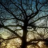 Tree at dusk   #Tree #silhouette #sky #dusk