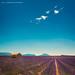 Lavender Fields Forever by Allard Schager