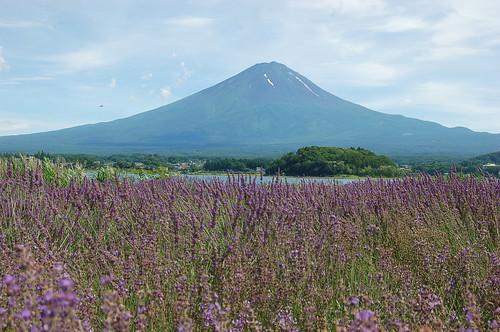 ★7月の風景★富士山の森とラベンダー