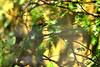 Bali Bird Park_317 by Mirna Rizka