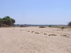 Sandbank with elephant droppings