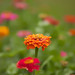 20140717_flowers-2_0016