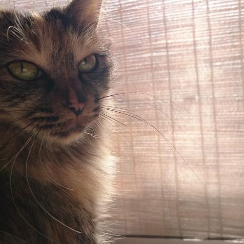 日向ぼっこを邪魔されてちょっと不機嫌 by Chinobu