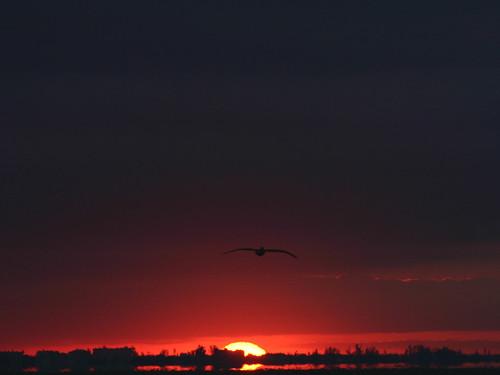 morning sky orange bird yellow sunrise skyscape dawn florida flight 100v10f f10 sanibel
