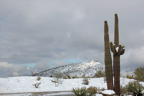 arizona cactus 15fav snow landscape ilovenature nikon carefree