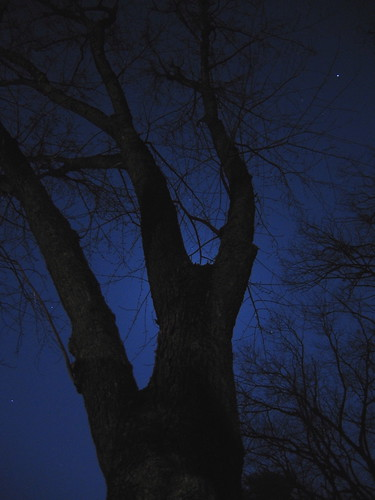 star & tree by Ctd 2005