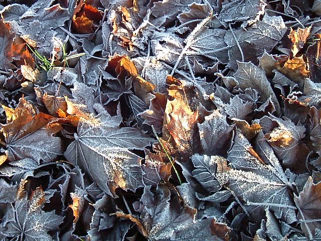 frost, Fujifilm FinePix A405