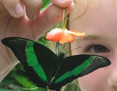 Flying jewels (.butterflies.)