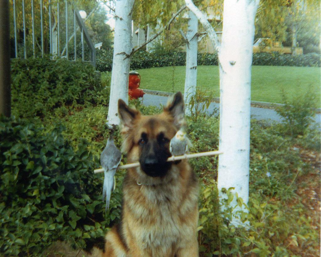 Brandon- Guide Dog Career Change