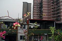 Pacific Theme - Taipei, Taiwan