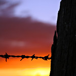 Next Image: Barbed Wire Fence by Sunset