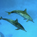 Oceanic Dolphins - Photo (c) Alfonso González, some rights reserved (CC BY-NC-ND)