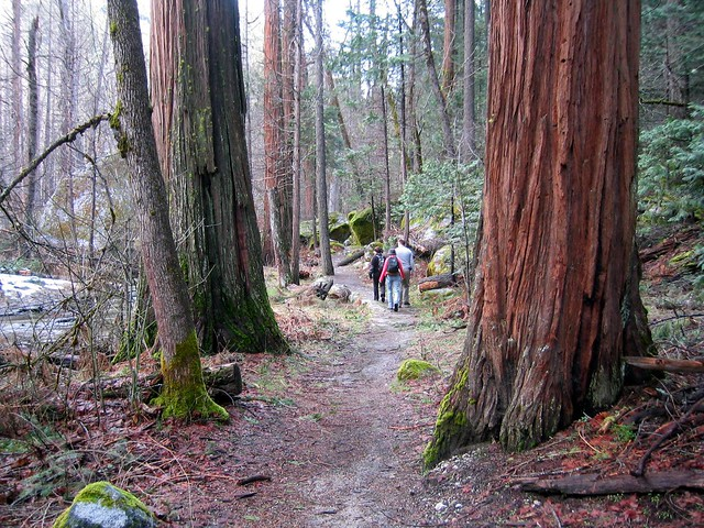 Landscaping With Redwood Trees : Redwood trees flickr photo sharing