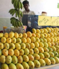 Juicy -Juicy Mangoes