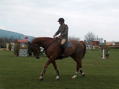 animal training(0.0), endurance riding(0.0), physical exercise(0.0), animal sports(1.0), equestrianism(1.0), english riding(1.0), eventing(1.0), dressage(1.0), mare(1.0), stallion(1.0), show jumping(1.0), equestrian sport(1.0), sports(1.0), recreation(1.0), outdoor recreation(1.0), equitation(1.0), horse(1.0),