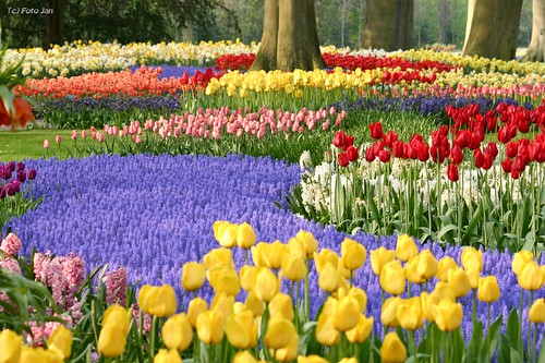 Holanda los jardines del keukenhof - Jardines de tulipanes en holanda ...