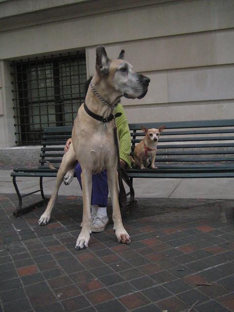 Smallest Dogs On Sale In Australia