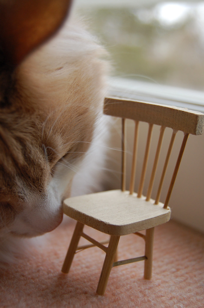 Small chair. Big cat