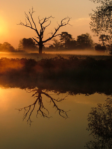 morning orange mist lake reflection water sunrise dawn buckinghamshire peaceful calm deadtree stunning slough berkshire kevday langley langleycountrypark dawnglow chtk