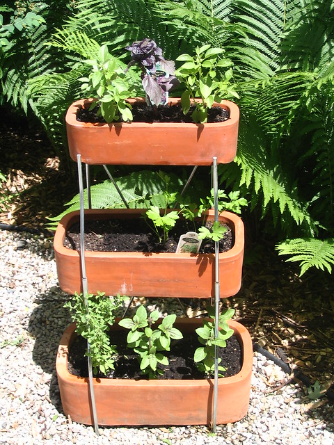 italian herb garden Flickr Photo Sharing