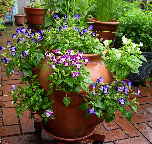Flower suggestions for strawberry pots for Strawberry garden designs