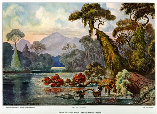 Haeckel: Jungle River, Ceylon