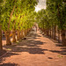 Walking Down Sunny Linden Lane (See big for details) by Alfred Grupstra Photography