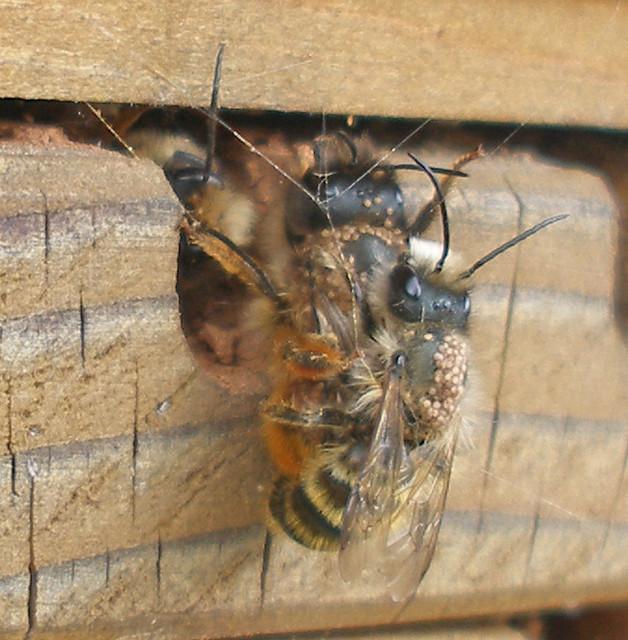 mating pair April 28 15 2