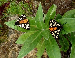 fil(et) à papillons - Page 6 19601271679_9e4de17f4a_n