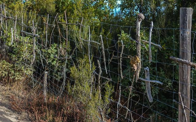 Gillians Camino Pics-40