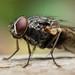 Fly, Macro world - Olympus TG-4 by Steven David Johnson