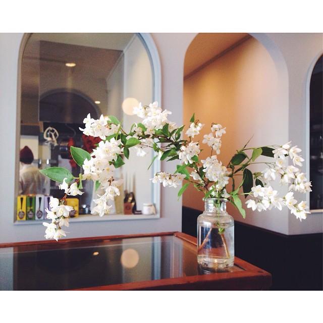 ・ 白い可憐なお花をいただきました。思いがけず爽やかな5月のスタートです:herb::leaves::sparkles: