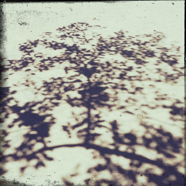 Shadow of tree branches