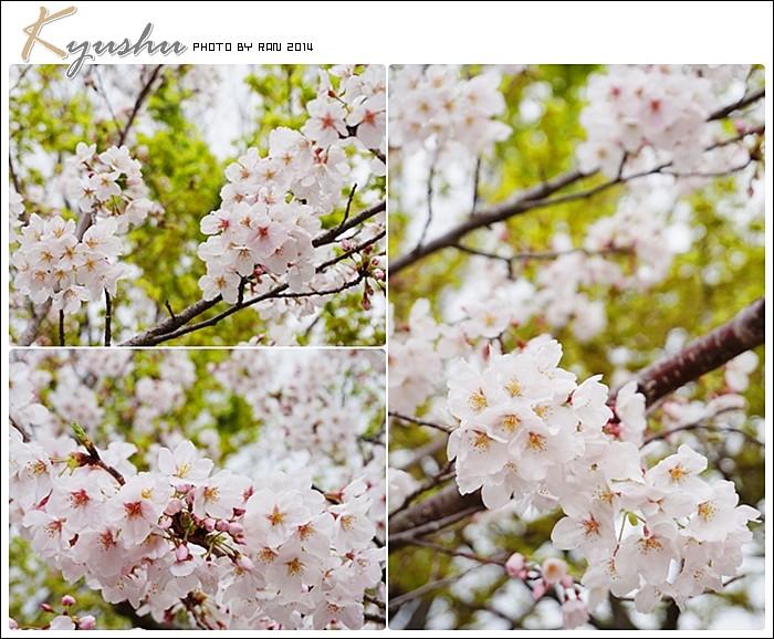 kyushu20140326019