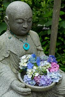 明月院 紫陽花&お地蔵様