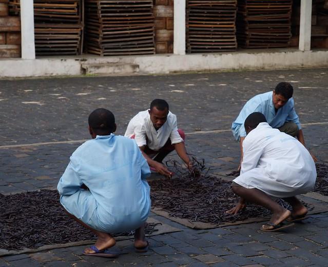 Arbeiter unsere Lieferanten trocknen Vanille an der Sonne