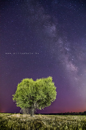 longexposure tree night way olive cyprus milky kktc