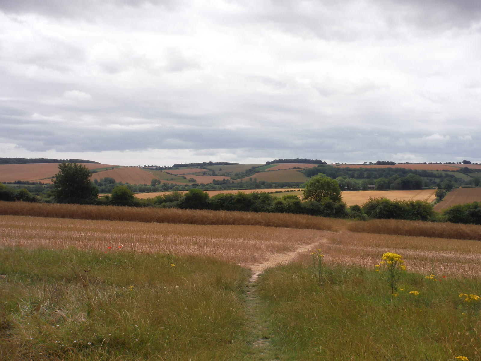Emerging from Suburbia (views of the Chalke Valley and Downs behind) SWC Walk 254 Salisbury Circular