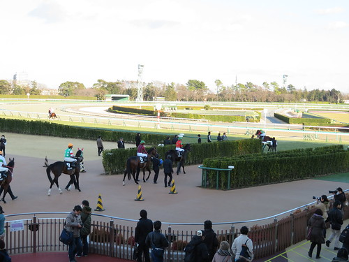 中山競馬場で本場場入場をする馬たち