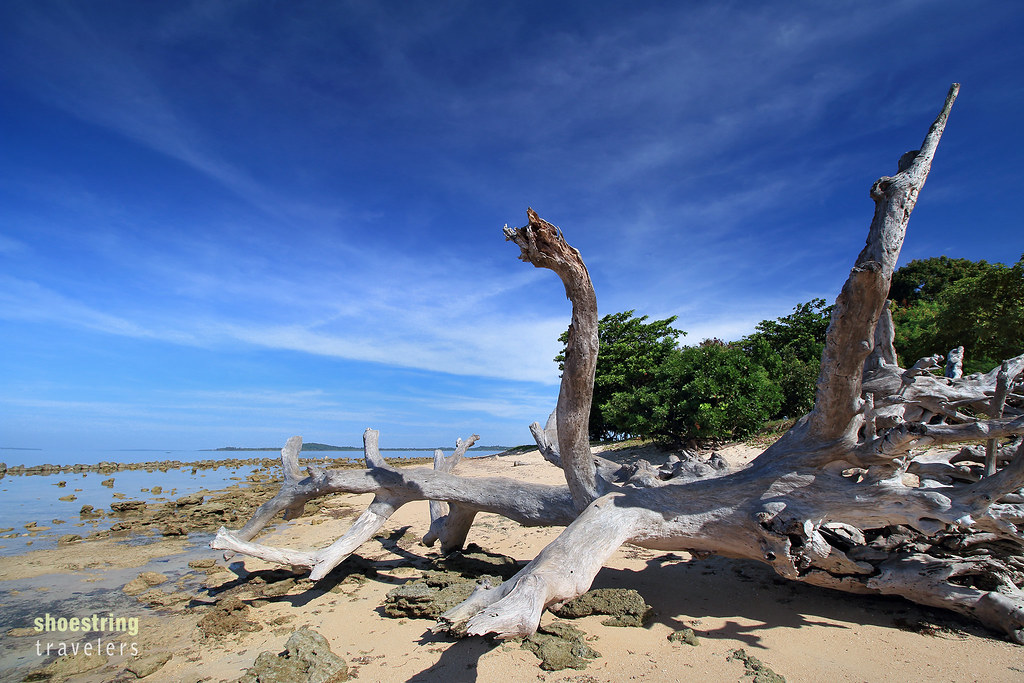 large driftwood on Potipot Island