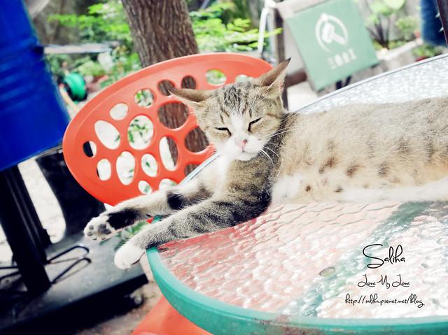 可愛貓咪 (3)